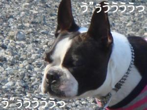 CONA&うさちゃん011