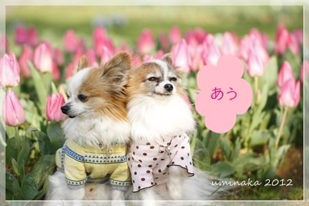 04_MG_0727-2012-1.jpg