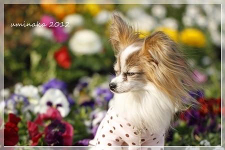 10_MG_1006-2012-.jpg