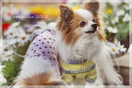 12_MG_1031-2012-.jpg