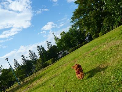 青空の公園☆