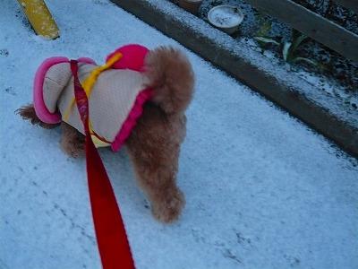雪だ~♪・2
