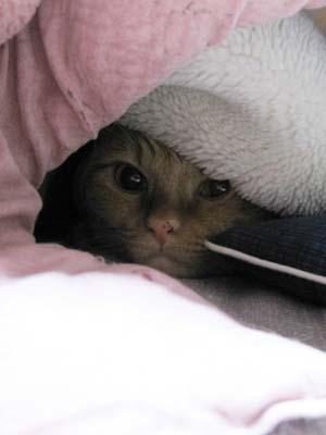 毛布一枚2