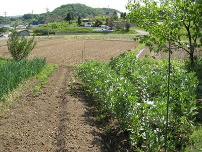 畑の様子3