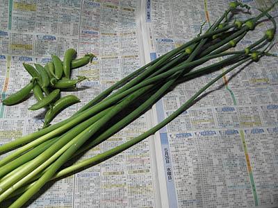 ニンニクの芽収穫3