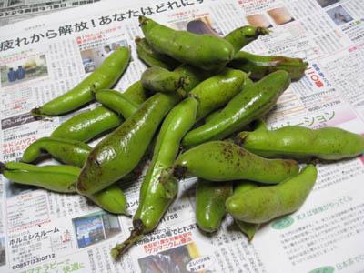 そら豆収穫1
