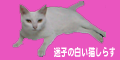 shirasu_banner_pink.png