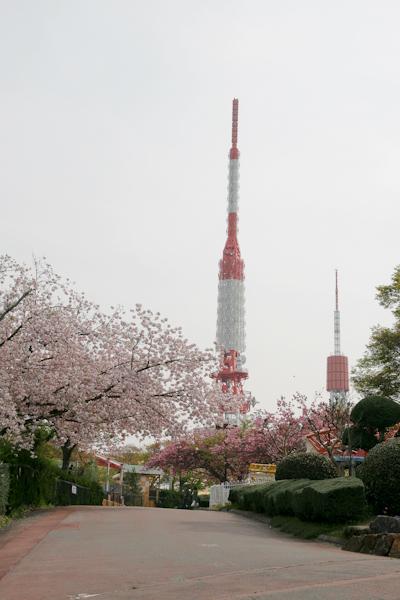 八重桜とテレビ塔111206