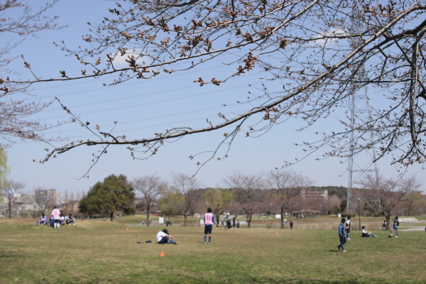桜サッカー120401