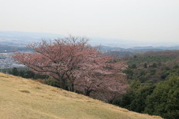 桜110621