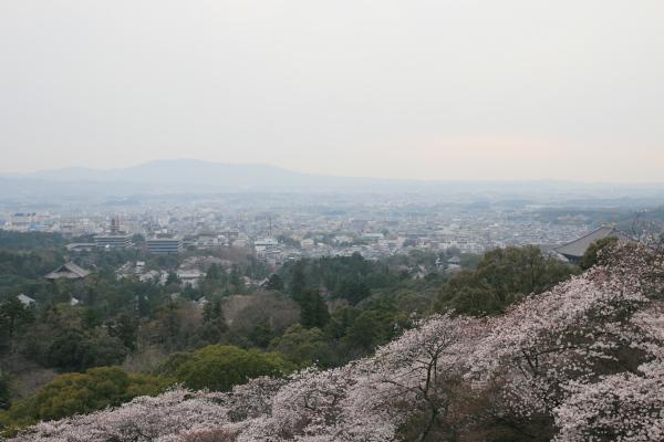 若草山の桜110622
