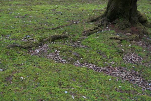 苔と根っこ110623