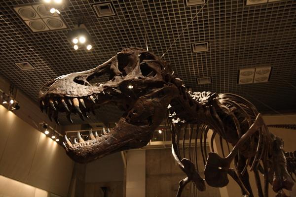 肉食恐竜101009