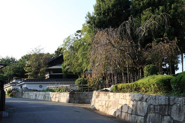 竹やぶ外観101111