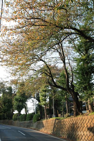 秋の坂道101114