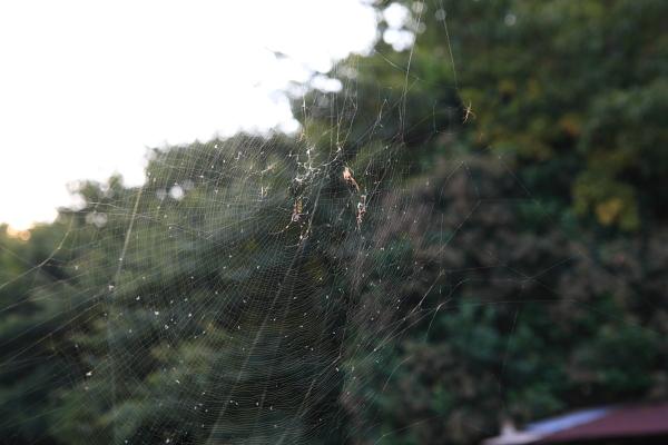 蜘蛛の巣101127