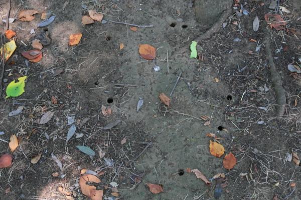 蝉の穴110902