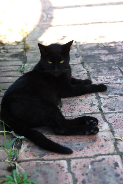 黒猫111002
