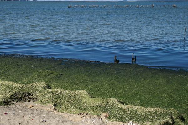 海辺の緑色111008