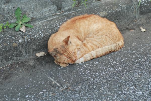 道端猫111127