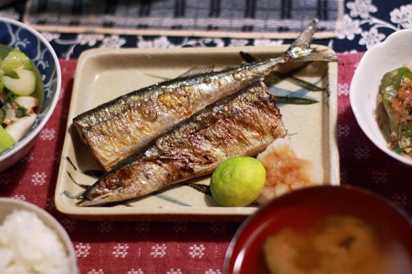 秋刀魚1111111