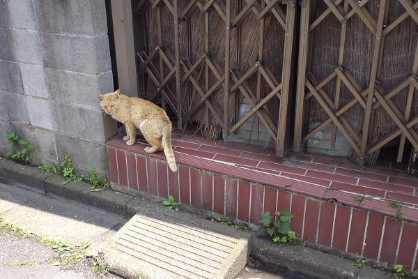 道端の猫1110616