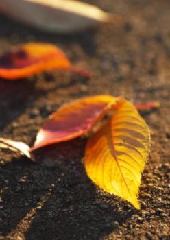 秋色の煌き