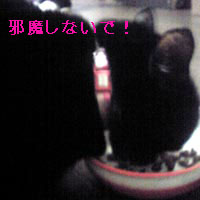Image104-3.jpg