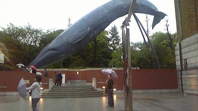 白ながす鯨