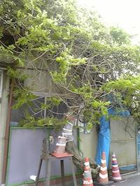 Image949.jpg