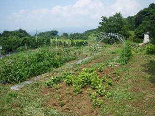 菜園の草払い