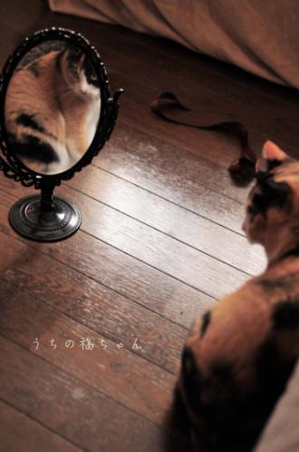 福ちゃんと鏡。