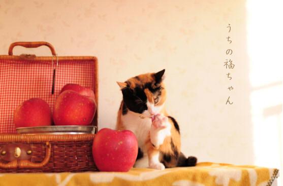 ダッフィーと林檎。