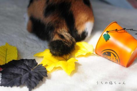 秋色と福3