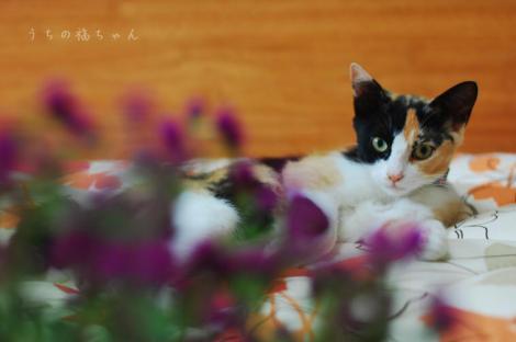 福ちゃんとお花