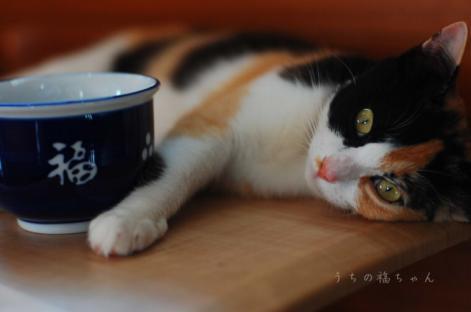 福ちゃんと福茶碗