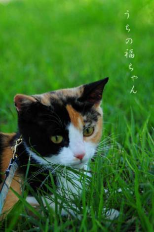 福ちゃんとお散歩1