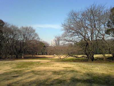 081225砧公園