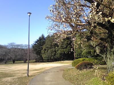 090105砧公園
