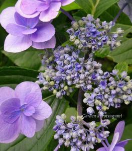 044_convert_20110731000322.jpg