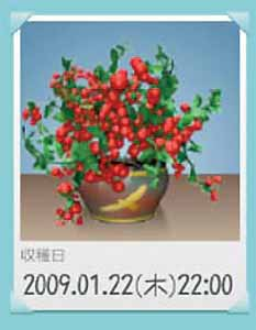 090122_tomato.jpg