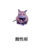 cat001-2.jpg