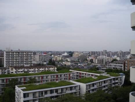 屋上の雑草
