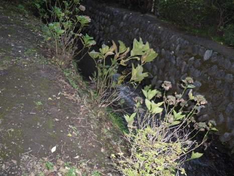 玉川上水の流れ