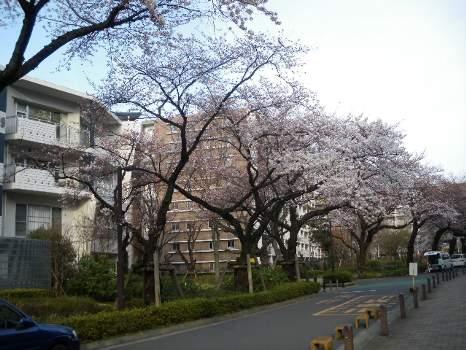 桜2010年