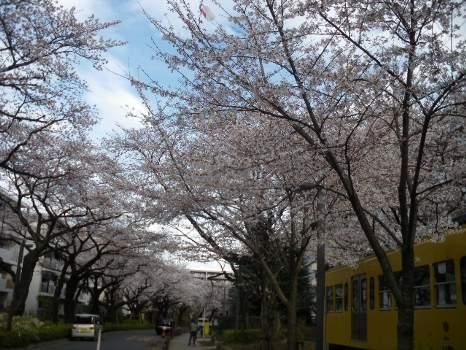 2010年桜D
