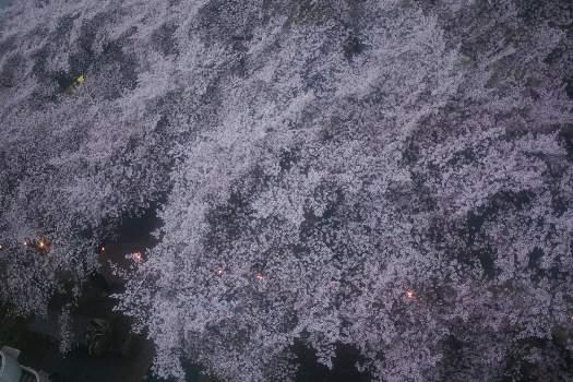 2010年桜E