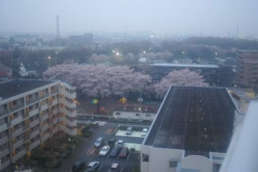 2010年桜G