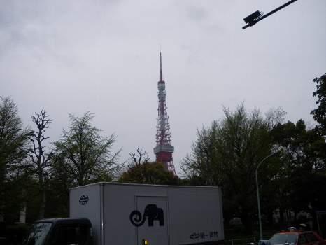 タワーと葉桜