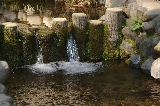 国分寺の湧水